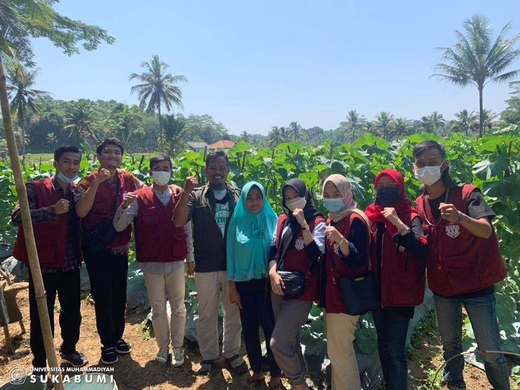 Mahasiswa UMMI Rancang Kebun Melon Jadi Agrowisata
